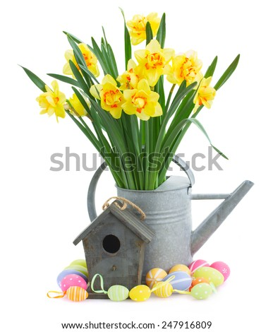 spring yellow narcissus in watering can with birdhouse and easter eggs isolated on white background - stock photo
