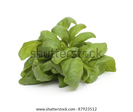 springs of fresh basil on white background