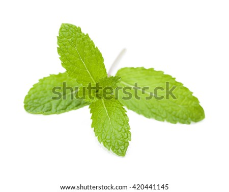 springs of fresh garden mint isolated on white - stock photo