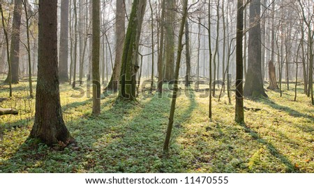 Springtime at old natural forest with dead tree trunk lying in foreground - stock photo