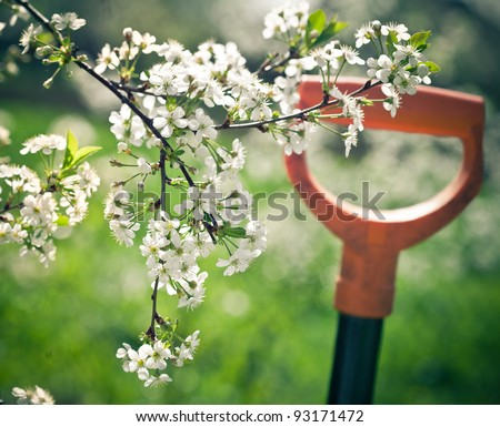 Springtime. Blooming cherry branch and shovel - stock photo