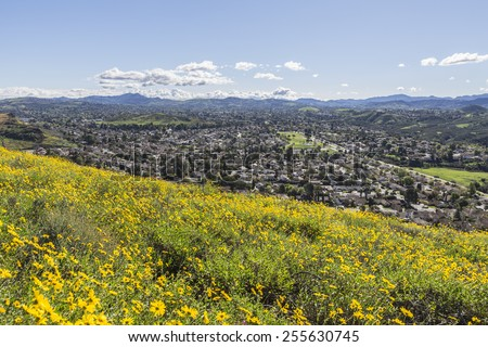 Springtime Bush Sunflower wildflower field in Wildwood Regional Park above the Los Angeles suburb of Thousand Oaks, California. - stock photo