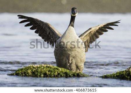 canada goose store vienna