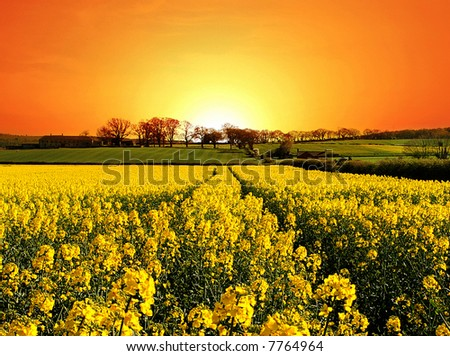 Springtime Dawns over Rural England - stock photo