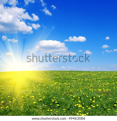 Springtime - Field of dandelions,blue sky and sun. - stock photo
