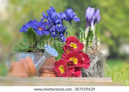 springtime flowers in garden  with gardening accessories - stock photo