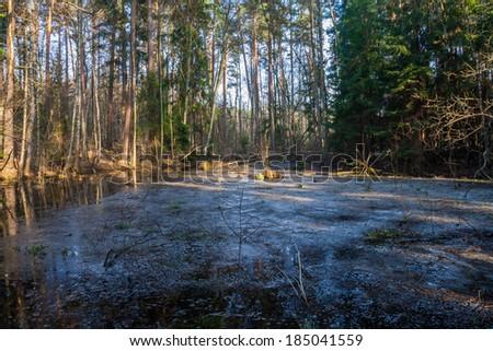 springtime forest - stock photo