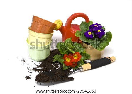 Springtime. Gardening tools, colorful primula and soil.