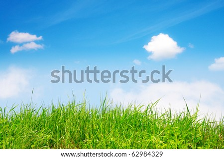 Springtime, green grass and sky - stock photo