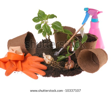 springtime  home gardening- potting plants  in peat pots - stock photo