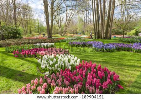 Springtime in Keukenhof Gardens, Holland. - stock photo