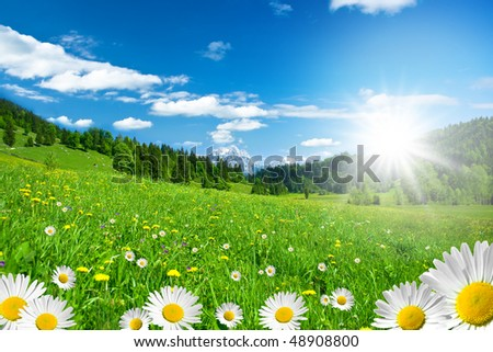 springtime in the alps with mountains and flowers - stock photo