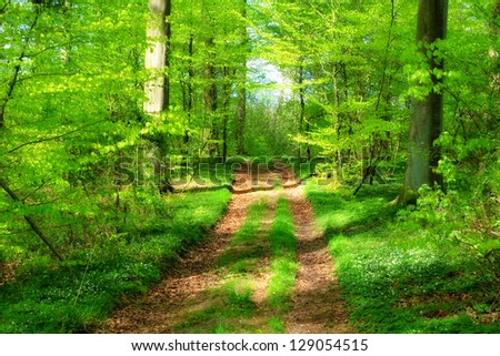 Springtime in the forest - stock photo