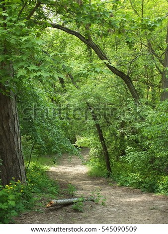 Springtime. Path in the woods