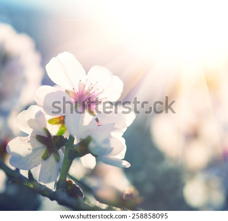 Springtime. Spring flowers blossom background. Beautiful nature scene with blooming tree and sun flare. Sunny day. Beautiful Orchard - stock photo