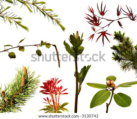 Springtime! Variety of fresh young plant shoots and buds isolated on white. - stock photo
