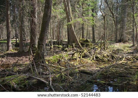 Springtime wet mixed forest with standing water in direct light of sun - stock photo
