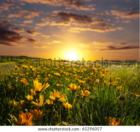 Springtime with the sun rising or setting - stock photo