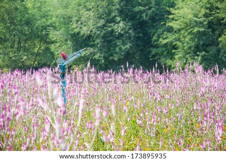 sprinkle in flower graden - stock photo