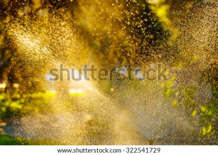Sprinkle work in a city park. Drops of water on the leaves of plants. - stock photo