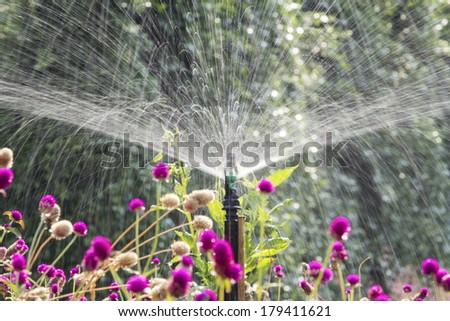 Sprinkler head watering the flowers in garden - stock photo