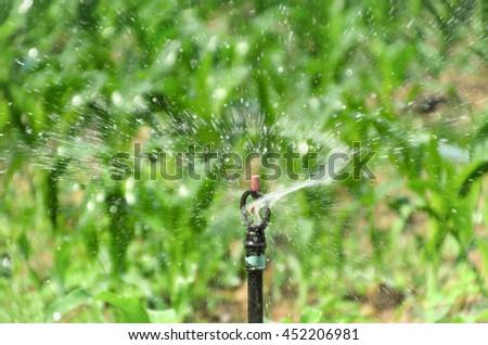 sprinkler in farm Sugarcane Daytime . - stock photo