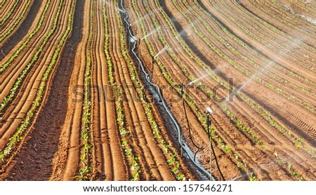 Sprinkler irrigated newly planted field  - crops growing on fertile farm land in Israel - stock photo
