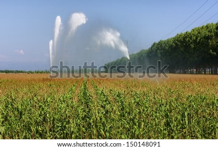 Sprinkler irrigation in a maize field in lower Friuli, Italy, in August. - stock photo