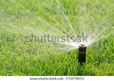 sprinkler watering fresh lawn - stock photo