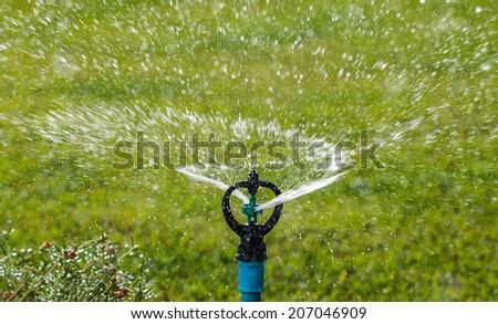 Sprinkler watering in the flowers garden. - stock photo