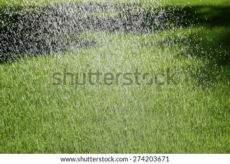 Sprinkler Watering the Lawn blur - stock photo