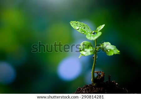 Sprout, a little tree growing from the ground - stock photo