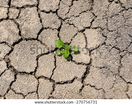 sprout beginning growth on the cracked ground - stock photo