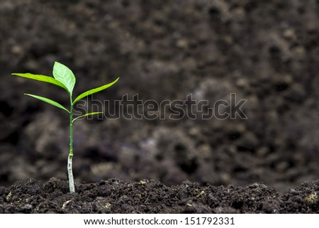 Sprout for planting at the farm - stock photo