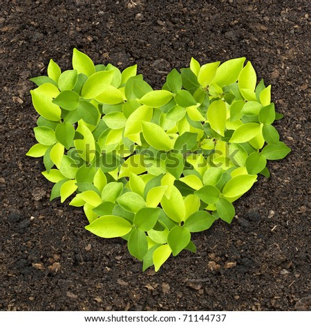 Sprout green plants growing a heart shape on soil manure in the birds eye view - stock photo