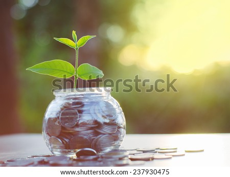 Sprout growing on glass piggy bank with sunset light in saving money concept