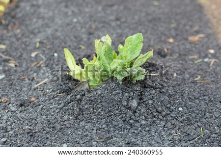 sprout growing through the asphalt - stock photo