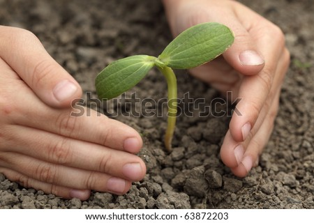 sprout in child hand - stock photo