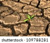 Sprout in dried cracked mud - stock photo