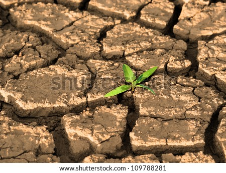 Sprout in dried cracked mud