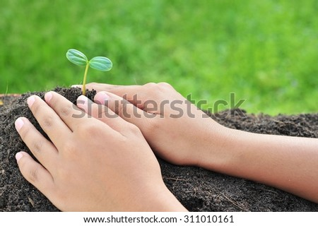 sprout in gardener hands.