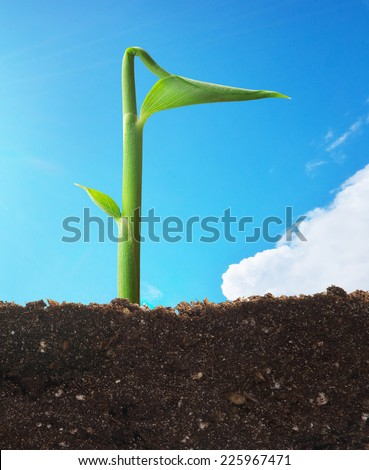Sprout in ground. Conceptual design. - stock photo
