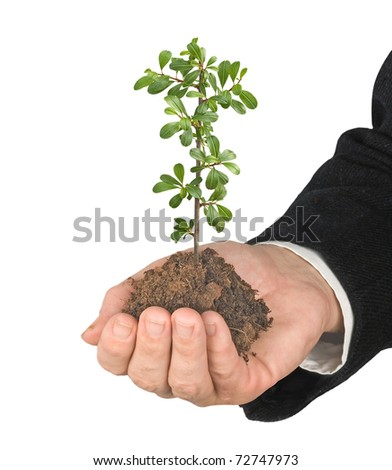 Sprout in hand - stock photo