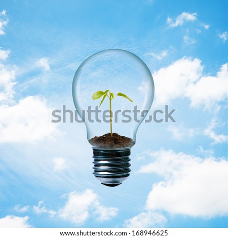 Sprout in lamp on blue sky background. - stock photo