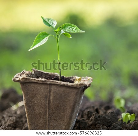 sprout in peat pot outdoors