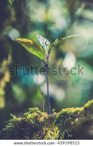 Sprout in the forest. (Vintage filter effect used) - stock photo
