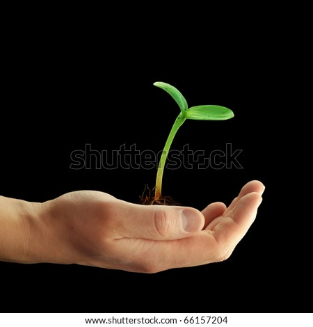 sprout in the man hands on a black  background
