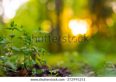 Sprout in the spring forest. Blur abstract background. - stock photo