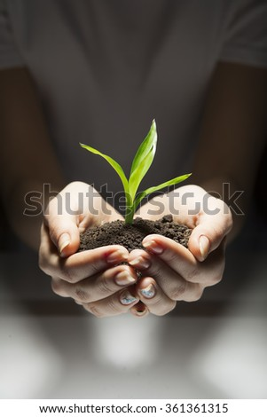 sprout in woman hand