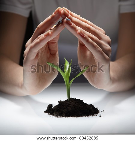 sprout in woman hand - stock photo